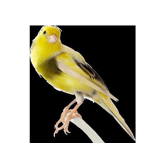 Photos d'oiseaux sur fond blanc The-ca10