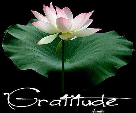 Méditation vibrations d'Amour Inconditionnel Gratit10