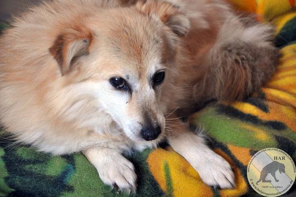 ELODIE, F-X, Taille Moyenne, Née mars 2008 (ROUMANIE/Pension HAR) Elodie10