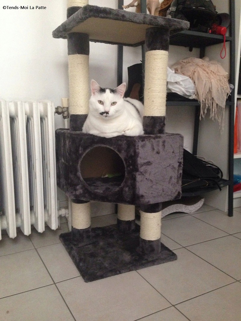 CHAT A ADOPTER : HALLY - chat mâle de 5 ans - Page 2 96937810