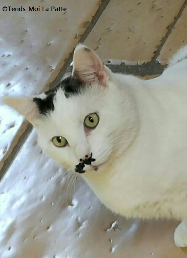 CHAT A ADOPTER : HALLY - chat mâle de 5 ans - Page 2 Mg-20110