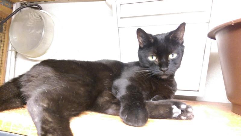 Les chats noirs du local : retrouvez les !  Dark_k10