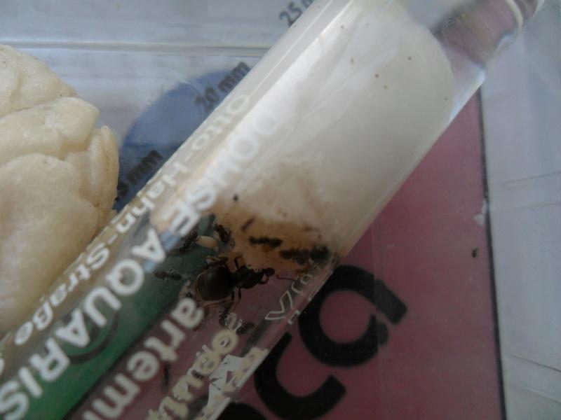 Une reine fourmi - Page 2 Sam_7010