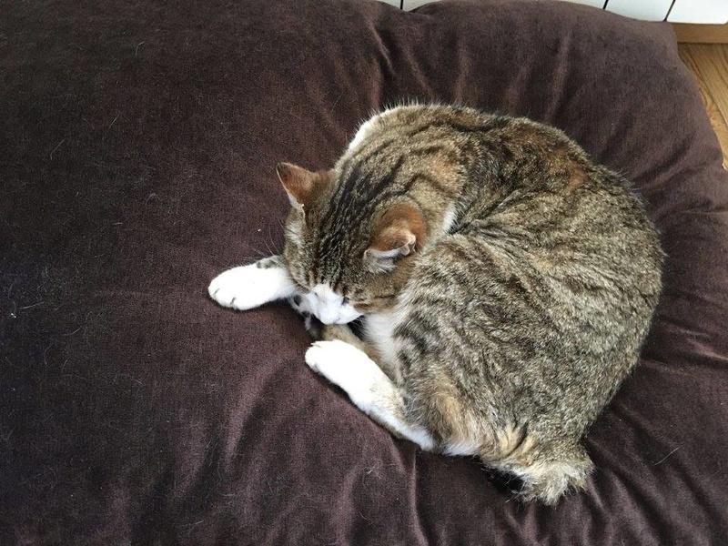 MINA - chat mâle très affectueux, estimé 10 ans - EN FA chez Christine (dpt 83) - DECEDE Mina10