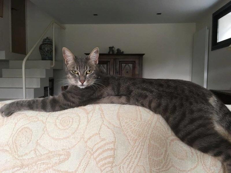 PIMPRENELLE, bébé chat femelle type européen - mai 2015 - adoptée par Sylvie (dpt 83) Pimpre10