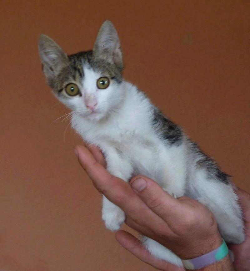 MILKA (ex CLOCHARD) - chaton mâle, né en juin 2016 - En FA chez Abysse (92) - Adopté par Imen (78) Titi10