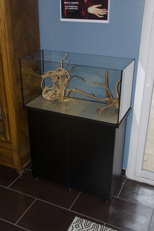 Débutant : Lancement d'un aquarium de 112 litres. Dsc_0210