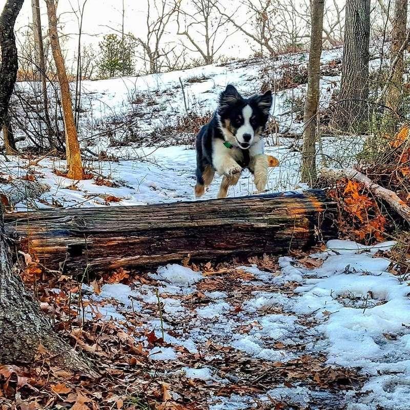 "Meet ""Atlas"" the dog Atlas_10"