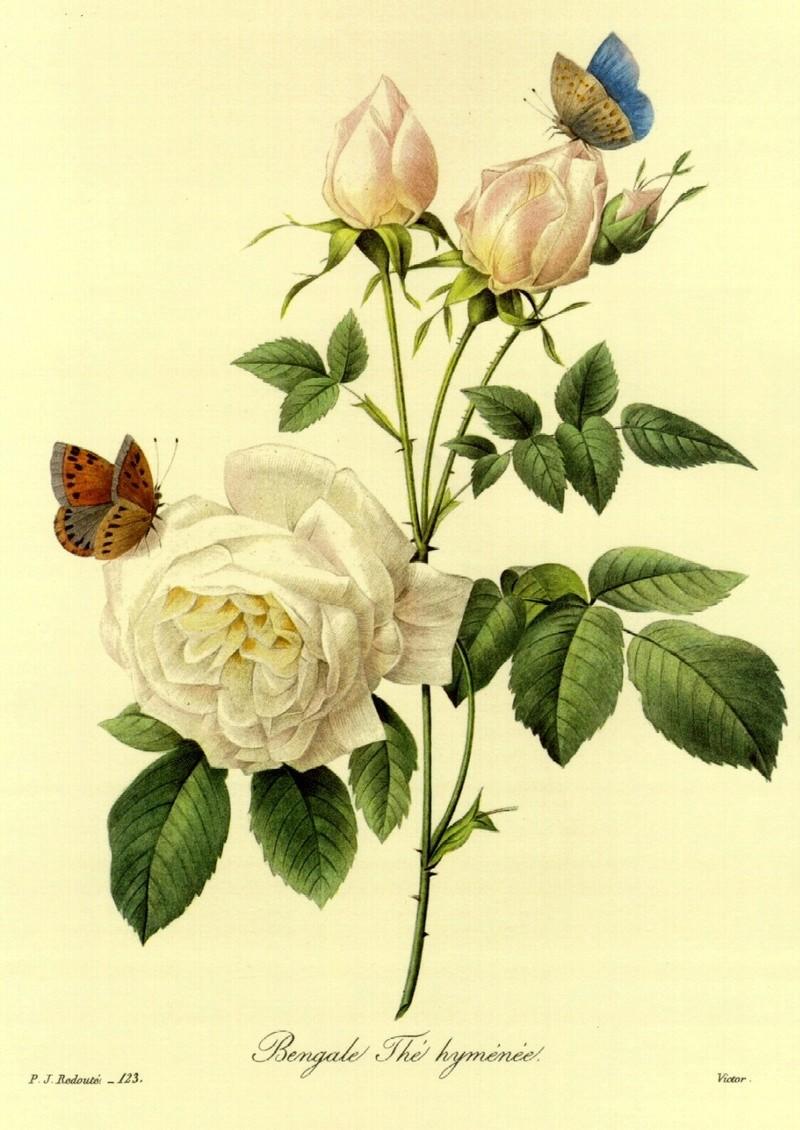 Le doux parfum des roses 0uuvqy10