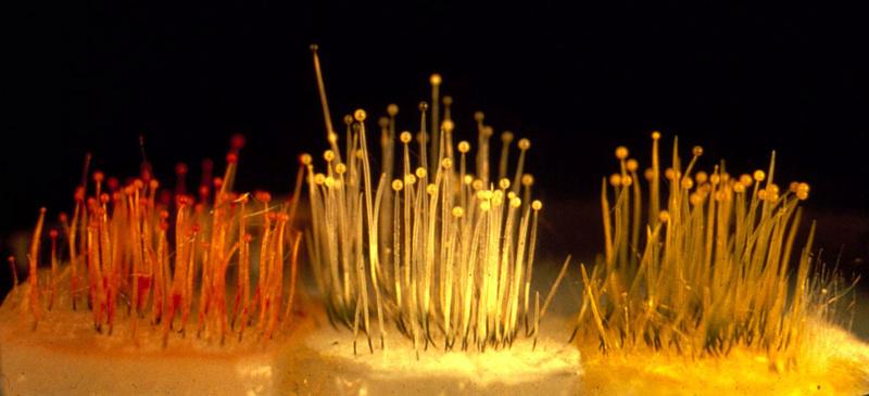 les champignons par ordre alphabétique. - Page 10 A_01108