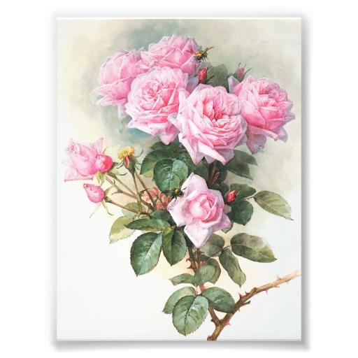 Le doux parfum des roses A_0117