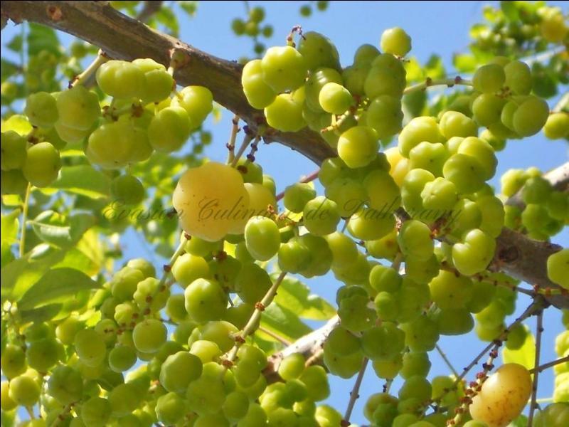 Fleurs,....fruit,.....tout ce qui se mange,...se boit....ou qui vient de la nature.......... - Page 23 A_gire10