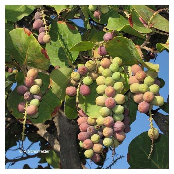 Fleurs,....fruit,.....tout ce qui se mange,...se boit....ou qui vient de la nature.......... - Page 22 A_rais10