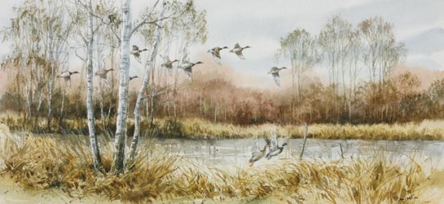 L'eau paisible des ruisseaux et petites rivières  - Page 3 Oiseau10