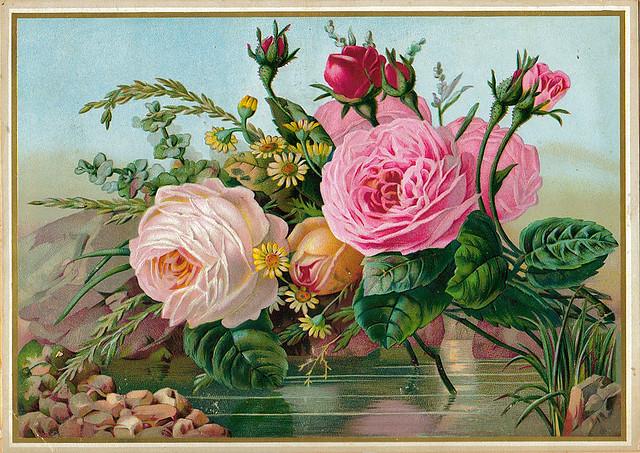 Le doux parfum des roses - Page 3 Ro16