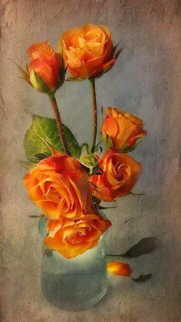 Le doux parfum des roses Rose_a10