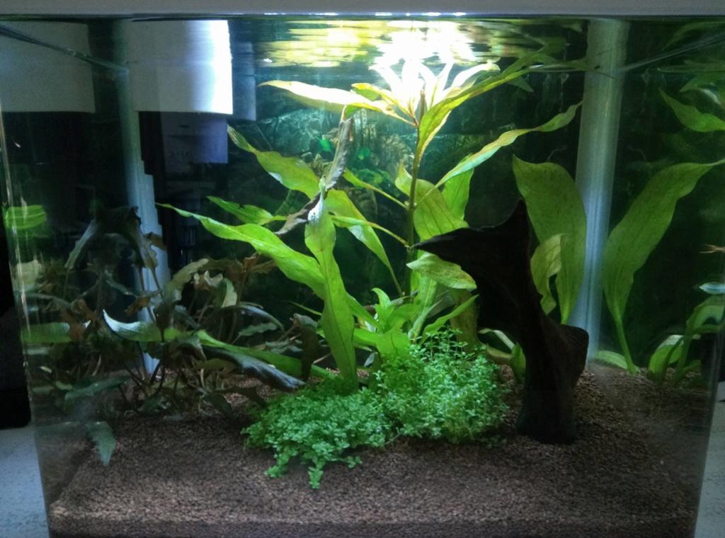 Lancement aquarium 20 litres pour des CPO 14881510