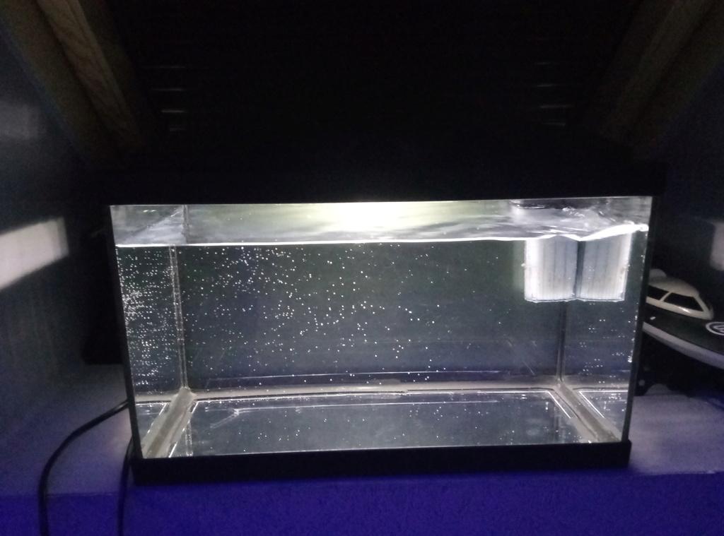 Lancement aquarium 20 litres pour des CPO P6102611