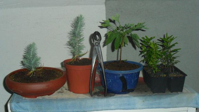 è nato un pino - È nato un pino!!! - Pagina 3 Sam_3410