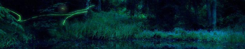 Forêt d'Efnor