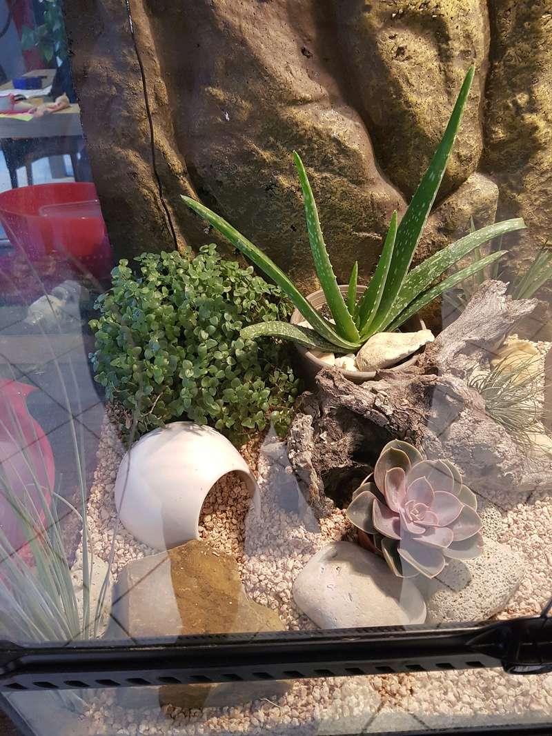 voila le terra de mon gecko leopard 20161027