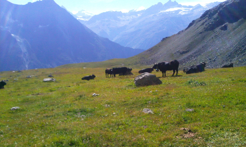 Brettelle Suisse? Photo014