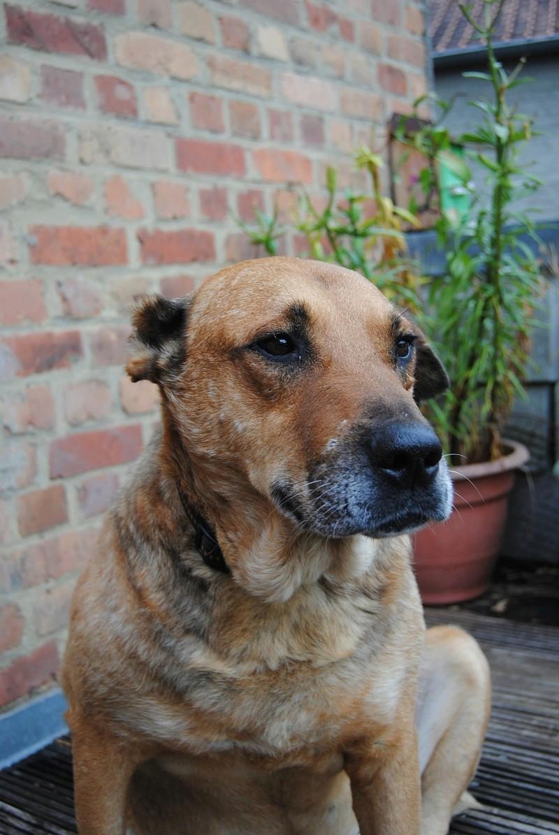 BALZAC - mâle croisé- taille moyenne né en 2008  (PASCANI) - en FA chez Yazou (Belgique) adopté par Cindy (Belgique) - Page 3 Dsc_0013