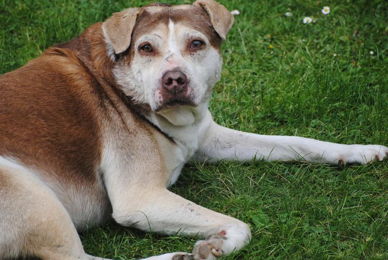 BALZAC - mâle croisé- taille moyenne né en 2008  (PASCANI) - en FA chez Yazou (Belgique) adopté par Cindy (Belgique) - Page 4 Dsc_0015