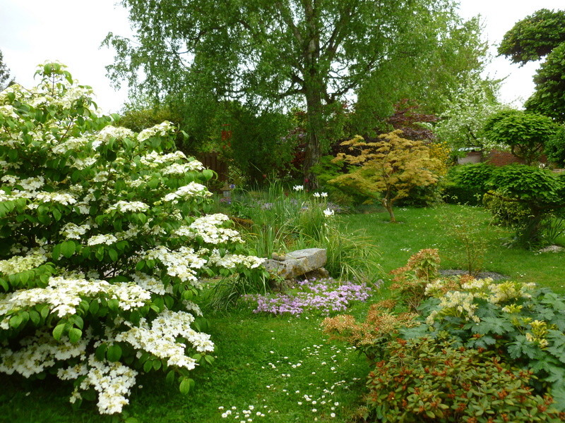 Jardin Zen pour néophyte P1000110