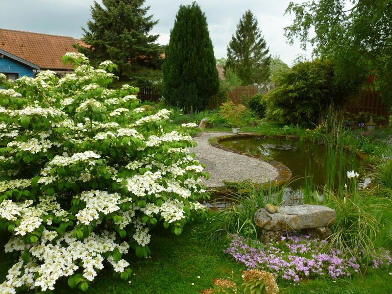 Jardin Zen pour néophyte P1000111