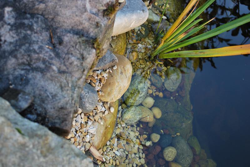 Bassin et cascade - Page 3 Dsc_0010