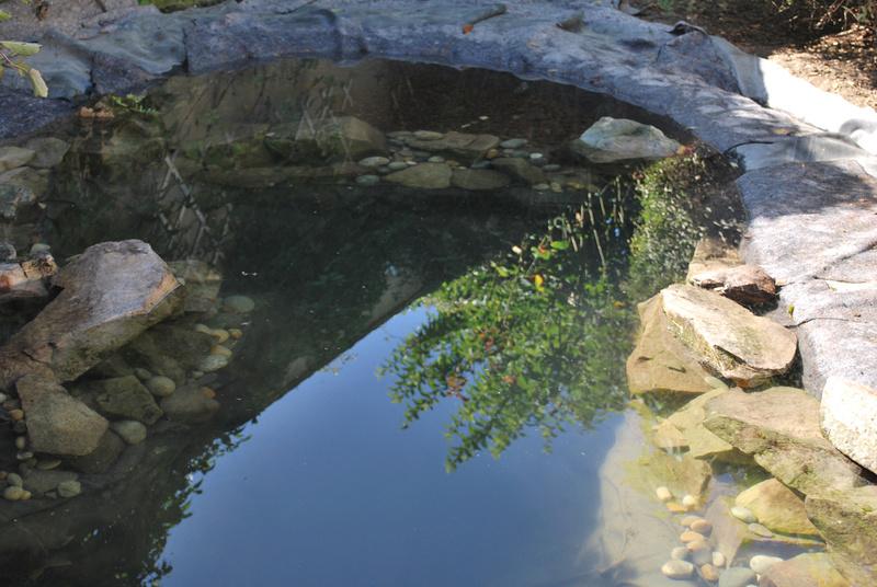 Bassin et cascade - Page 3 Lagune10