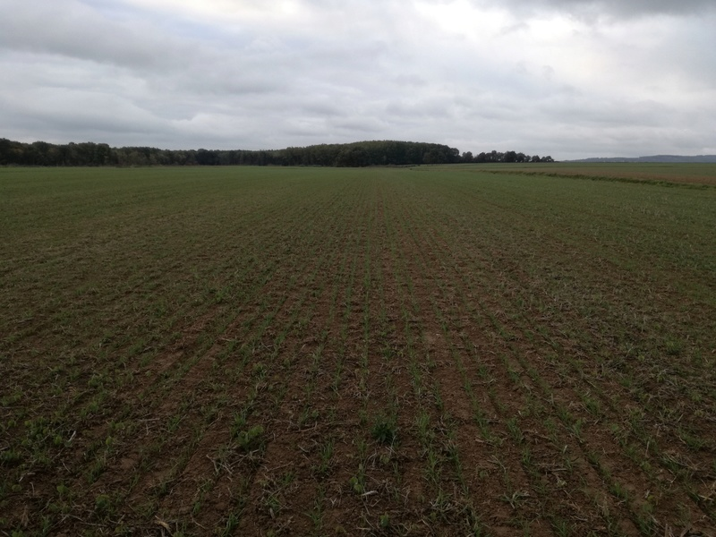 Semi direct de blé après soja Img_0919