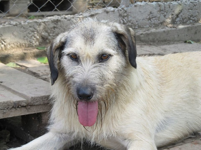 JULIA, F-X, née 2013 - 17 kg - Adorable (BELLA) Prise en charge SPA PONTARLIER 17_09111