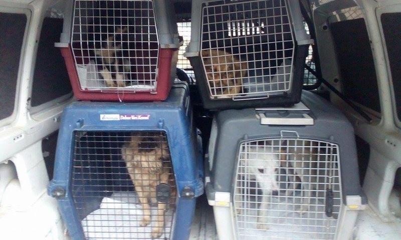 Rapatriement par camion du 30 septembre 2016 - Lucian, Razvan et Adelina Depart10