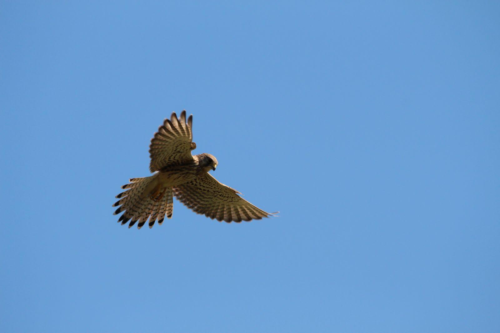 Der Falke / Die Falken 2011