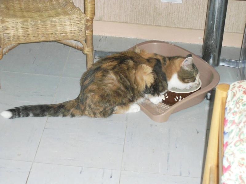 MIMI, adorable chatte tricolore de 16 ans - Page 2 14274310