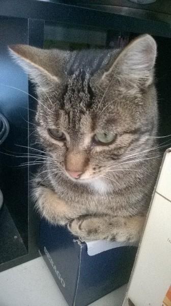 Loki le chaton - Page 3 Img_0913