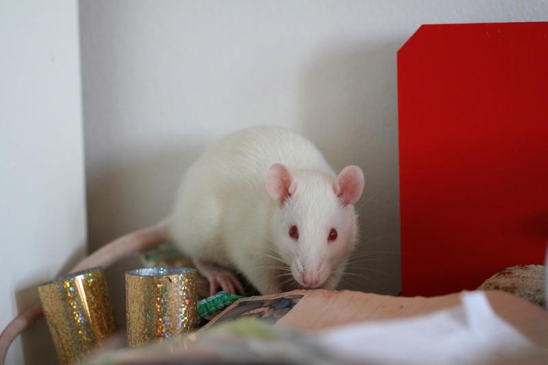 Eywa, petite sauterelle blanche de 1 an et demi Image16
