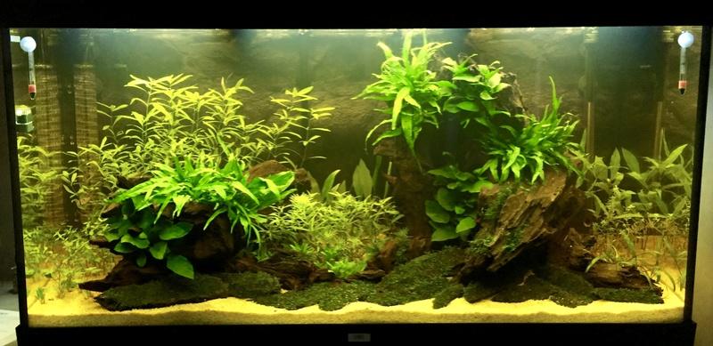 Aquarium juwel rio 300 - Page 2 Img_9616