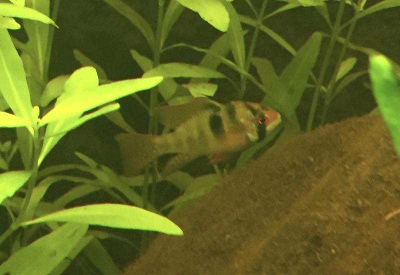 Aquarium juwel rio 300 - Page 2 Img_9617