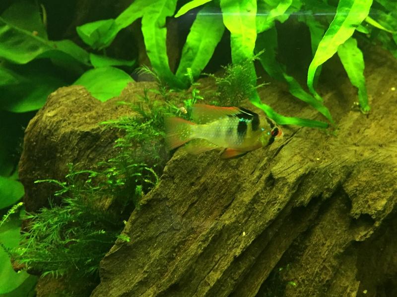 Aquarium juwel rio 300 - Page 2 Img_9619