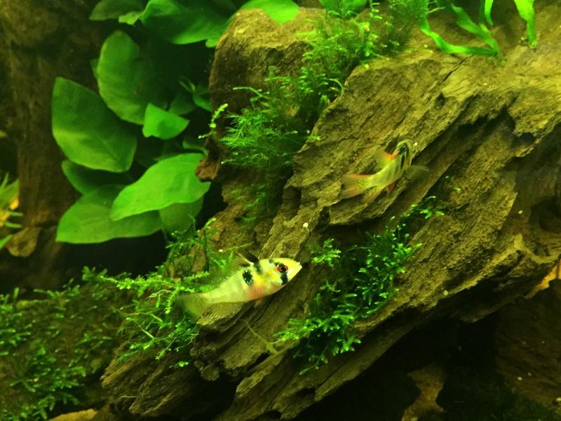 Aquarium juwel rio 300 - Page 2 Img_9620