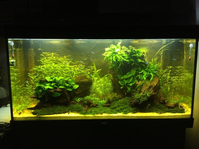 Aquarium juwel rio 300 - Page 3 Img_9714