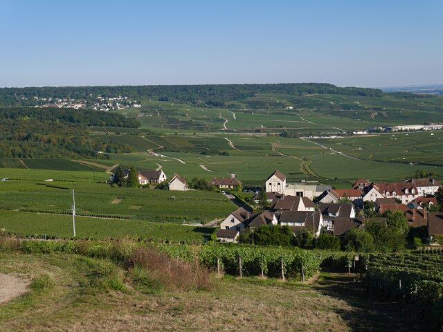 Une nouvelle sortie en Champagne 14358910