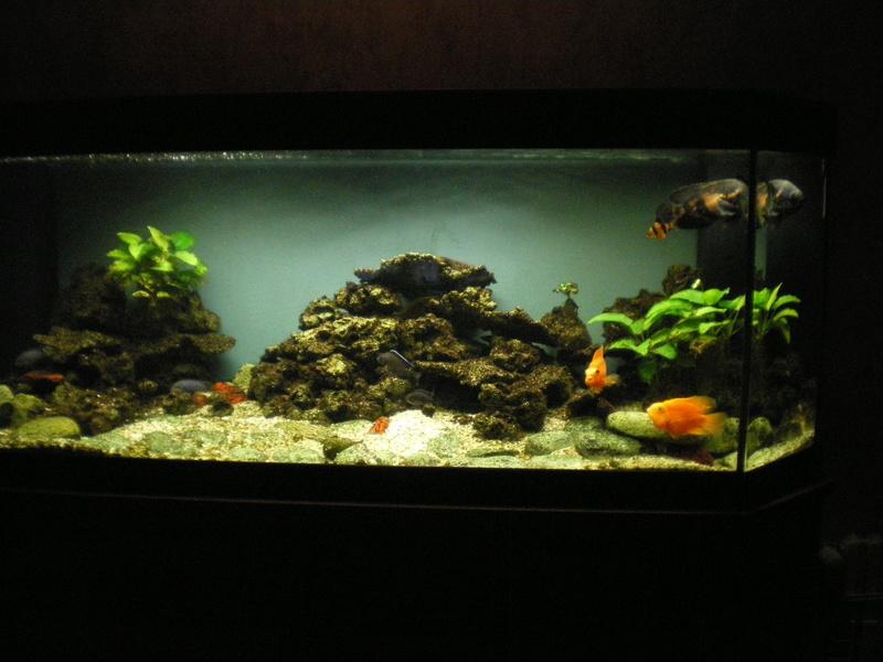 une nouvelle sur le forum Aquari14