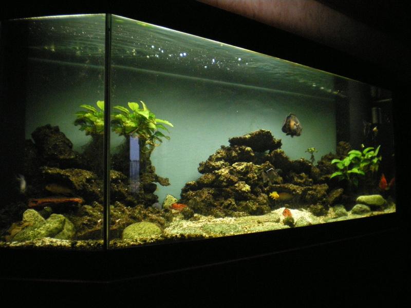 une nouvelle sur le forum Aquari15