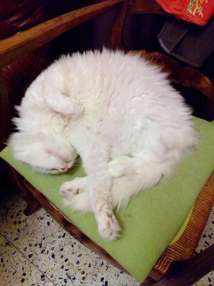L'histoire d'un chat mis à la porte  Mirabe10