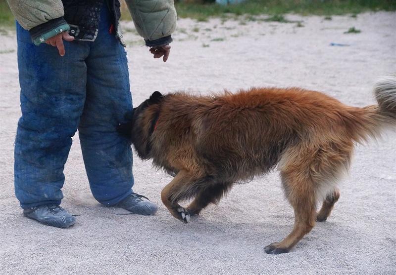 Photos de vous et vos chiens en pleine activité (course, vtt,ring, ..) 13055410
