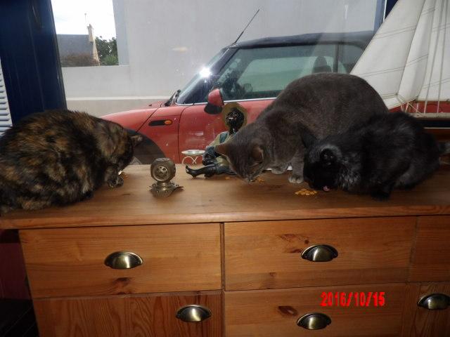 lavande - LAVANDE, FEMELLE BLACK SMOKE NOIRE MI-LONGS, NEE LE 01/09/2015 107_0410